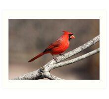 Bright Red Cardinal Art Print