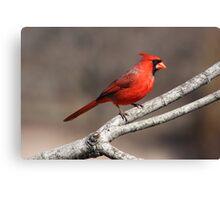 Bright Red Cardinal Canvas Print
