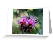 Shaving Brush Greeting Card