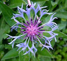 Flowers fromEdna's Garden 2 by dougie1