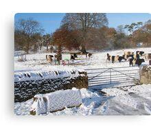 Cold Cows Metal Print