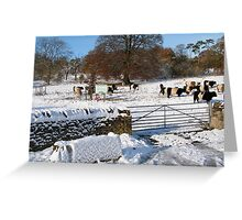 Cold Cows Greeting Card