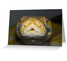 My albino python Greeting Card