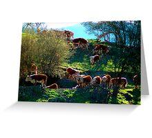 Follow The Light - Buckland Valley , Victoria Australia Greeting Card