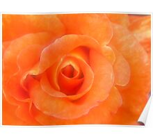 Heart Of A Rose, orange Poster