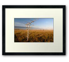 """Lone Cypress"" Framed Print"