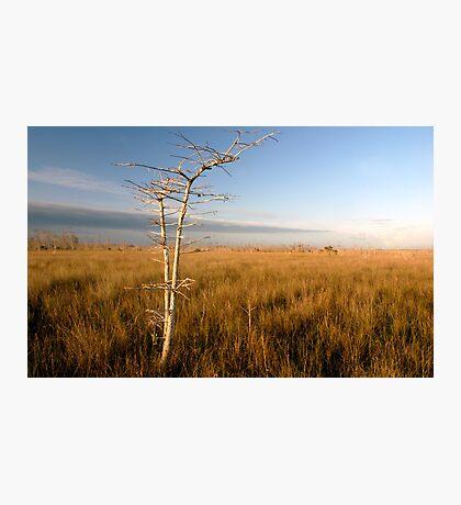 """Lone Cypress"" Photographic Print"
