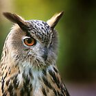 European Eagle Owl  by JamieP