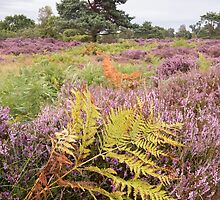 Dunwich Heather by Christopher Cullen