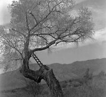 Spooky Old Tree by Jason Potter