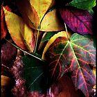 Autumn Colors by Sonja Svete