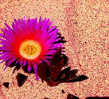 Califlower by AussiRayne