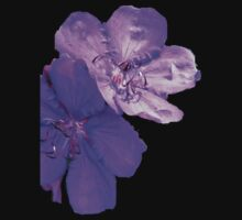 tibouchina flower by Virginia McGowan
