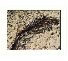 Dried Palm leaf Art Print
