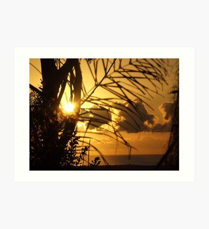 Garden Silhouettes........... Art Print