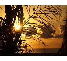 Garden Silhouettes........... Photographic Print
