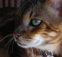 Eye of the Cat by AmyAutumn