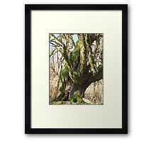Old Wise Framed Print