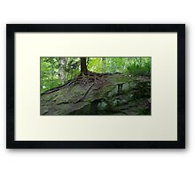 HDR Composite - Roots on Mossy Rock Framed Print