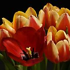 The Tulip Bunch by Michael Jordan