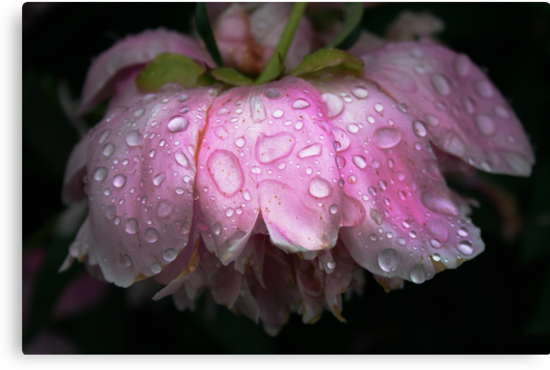 After rain by Antanas