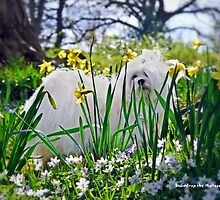 Snowdrop the Maltese & The Pretty Spring Flowers by Morag Bates