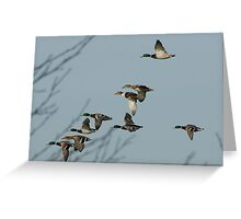 Duck!! Greeting Card