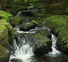 Stream in County Wickford by Bruce Bischoff