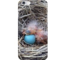 Newborn Robin iPhone Case/Skin