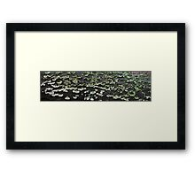 HDR Composite - Small Bracket Fungus on a Log Framed Print