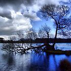 Blue Rain by Paul Gibbons