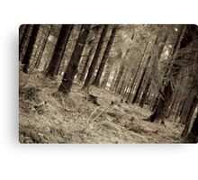 aged forest Canvas Print