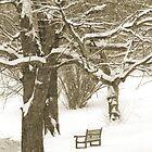 The Bench by Oksana Fox