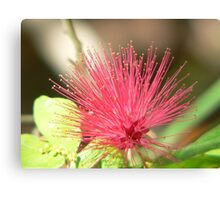 Bottle Brush Flower Canvas Print