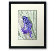 Poison Dart Frog Framed Print