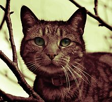 Cat in Tree gradient map by shane22