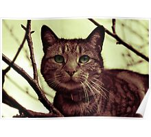 Cat in Tree gradient map Poster