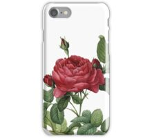 Victorian Scrapbook: Vintage Rose iPhone Case/Skin