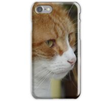 Ginger Tom iPhone Case/Skin