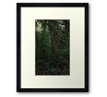 HDR Composite - Vines and Forest Framed Print