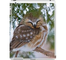 Sleeping Northern Saw Whet Owl - Ottawa, Ontario iPad Case/Skin