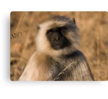 Langur Monkey Canvas Print
