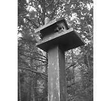 Birdhouse Lookout Photographic Print