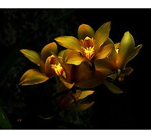 Yellow Orchid Bunch Photographic Print