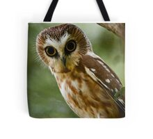 Northern Saw Whet Owl On Branch Tote Bag