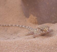 Sand Gecko by Justin Shaffer
