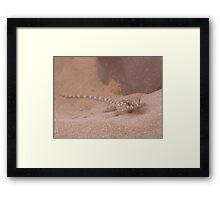Sand Gecko Framed Print