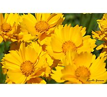 Yellow Sunshine Photographic Print