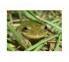 Smiley Frog Art Print