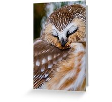 Northern Saw Whet Owl - Ottawa, Canada Greeting Card